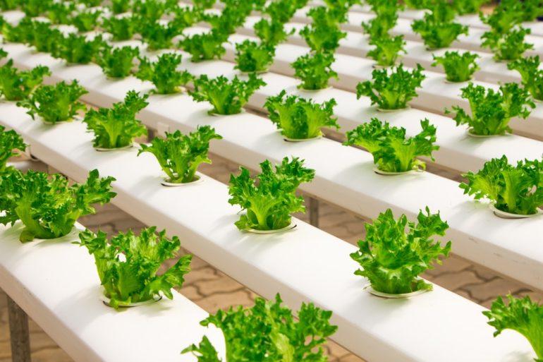 4 innovaciones que están transformando el sector alimentos y bebidas