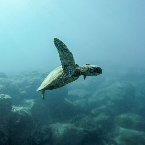 ¿Preservar tortugas mexicanas con open source? FinTech Cuenca y Campamento Palmarito lo hicieron posible